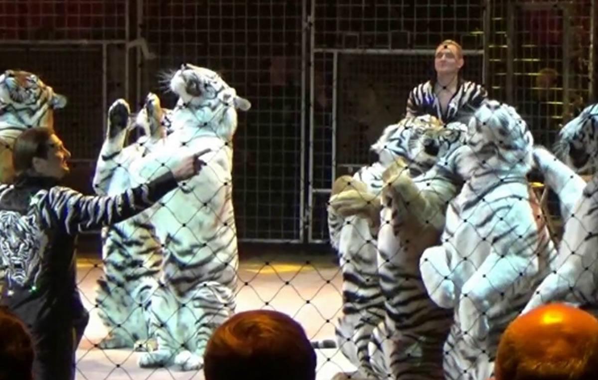 El circo no es vida para los animales: No respaldemos lacrueldad